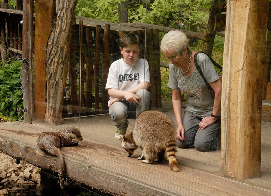 Ogrody zoologiczne żądają otwarcia, niezależnie od liczby zakażeń